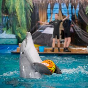 Дельфинарии, океанариумы Абрау-Дюрсо