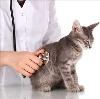 Ветеринарные клиники в Абрау-Дюрсо